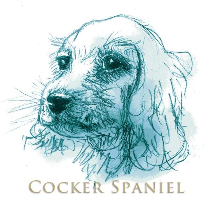 Cocker Spaniel Blue W Type