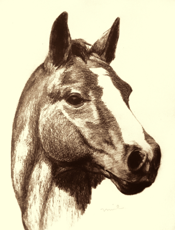 Horse Sketch color